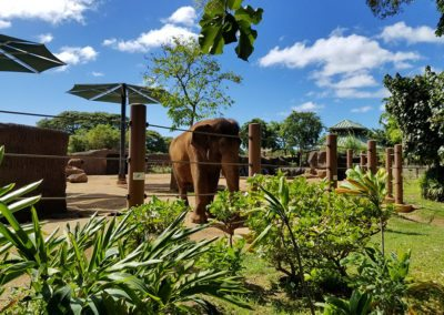 Honolulu Zoo – Asian Tropical Forest Elephant Exhibit
