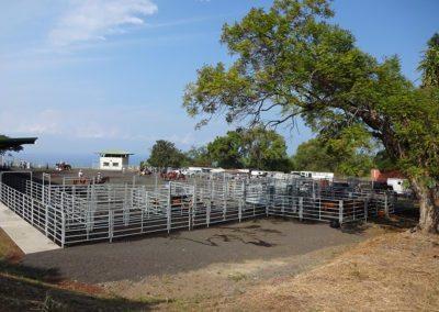 Honaunau Rodeo