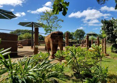 Honolulu Zoo – Asian Tropical Forest Elephant Exhibit